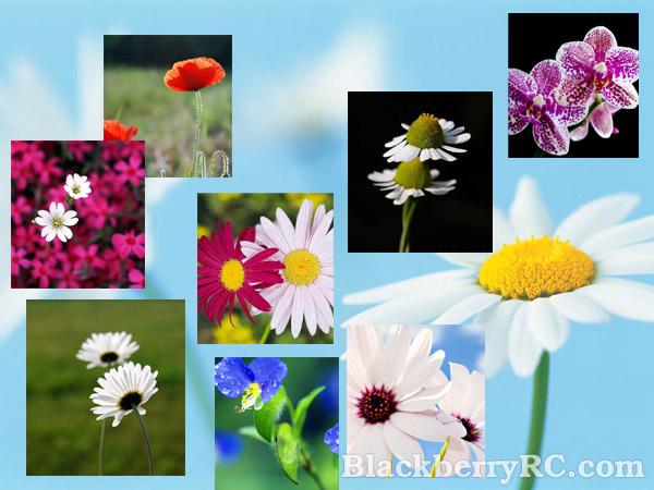 <b>Beautiful flowers in pairs for 9100 wallpapers pa</b>