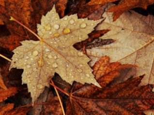 <b>leaf wallpapers</b>