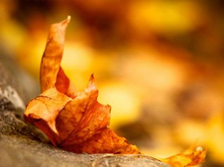 <b>Yellow leaves wallpapers</b>