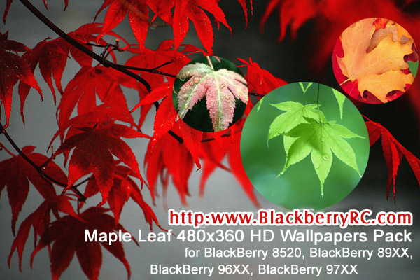 Maple Leaf - BB Wallpapers Pack