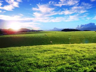 Sheeps cows hills wallpapers