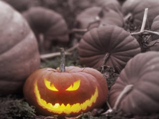 A Jack-o-Lantern in a Pumpkin Patch, Canada