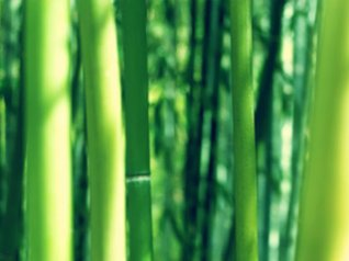 bamboo 9700 wallpapers