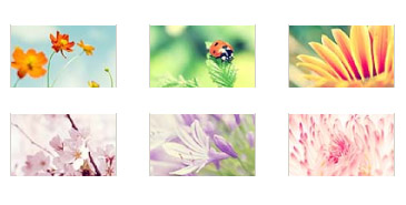 Fresh colors: Flowers Playbook Wallpapers Pack