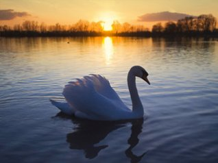 Swan Lake for BB 9105 wallpapers