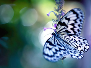 butterflies 480x320 wallpapers