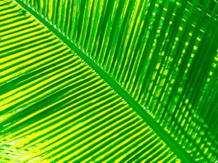 Palm leaf for 9780 wallpaper 480x360