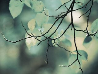 Twigs 640x480 wallpapers hd blackberry