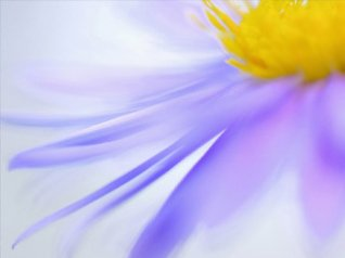 HD Purple flower 480x360 wallpapers
