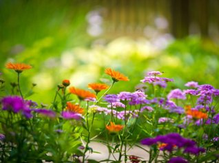 <b>Beautiful Colorful flowers 640x480 wallpapers</b>
