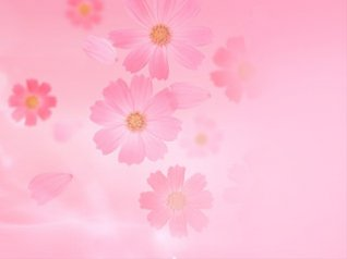 Pink love Valentine's Day 9380 wallpapers