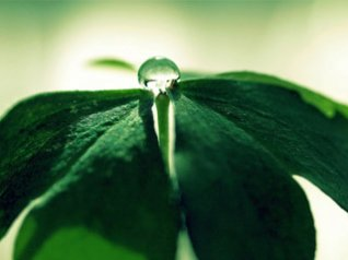 <b>Clover Drops wallpaper bb torch 9800</b>