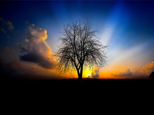 Sunset with Tree for blackberry bold wallpapers