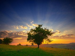 <b>Lonely Tree - cool hd wallpaper for blackberry</b>