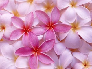 <b>Pink Colors flower wallpaper</b>