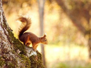 <b>Squirrel for blackberry 9780 hd wallpapers</b>