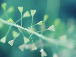 <b>Nature Bokeh wallpaper</b>