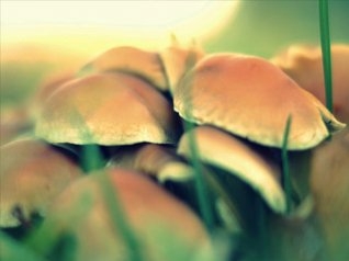 <b>Mushroom blackberry backgrounds wallpaper</b>