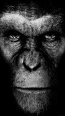 <b>The Planet Of The Apes 1440x2560 Wallpapers</b>